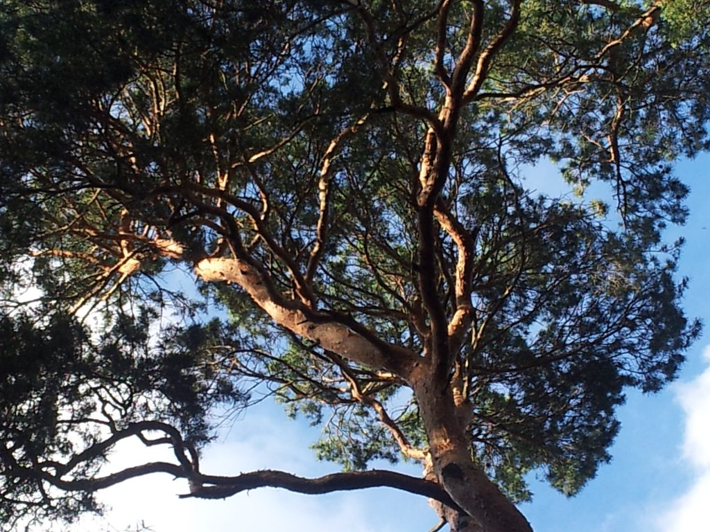 Herrlicher Baum im Wachstum