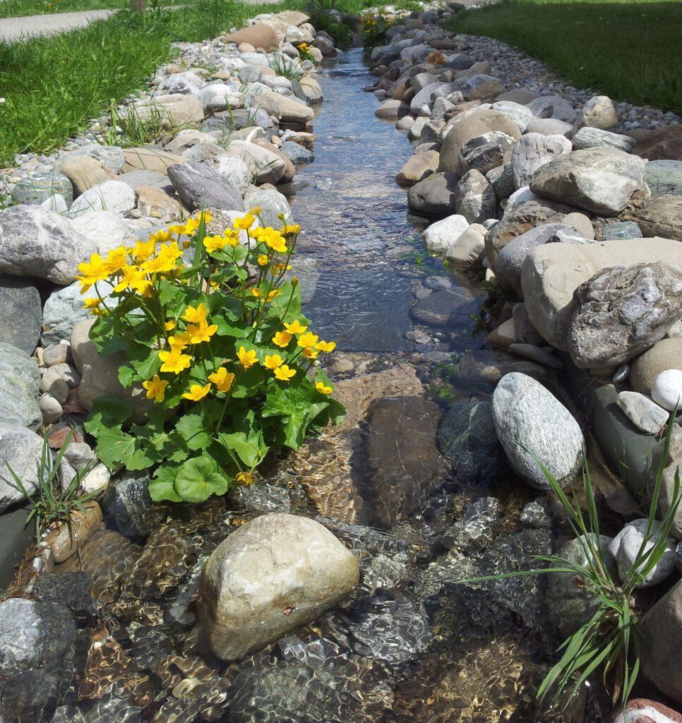 Sommerblume im Fluss, Fotograf Claudia Fabian